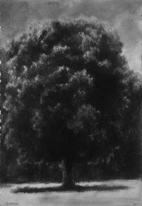"""""""Grand arbre devant lisière"""" 27,5x40 2005- mine de plomb et encre"""